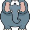 seeing elephants